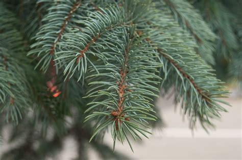 Weihnachtsbaum Einpflanzen ǀ Meister & Meister Blog