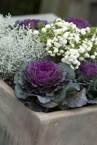 Plantes D Hiver Extérieur Balcon : fleurs exterieur automne hiver ~ Nature-et-papiers.com Idées de Décoration
