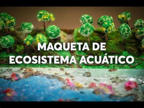 ecosistema acuatico dibujo colorear