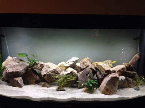 id 233 e d 233 coration naturelle et aquarium plus utilis 233 aquariums et vivariums forum animaux