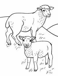 Teppich Knüpfen Vorlagen : sheep coloring page das d mmste schaf hei t pinterest malvorlagen vorlagen und schafe ~ Eleganceandgraceweddings.com Haus und Dekorationen