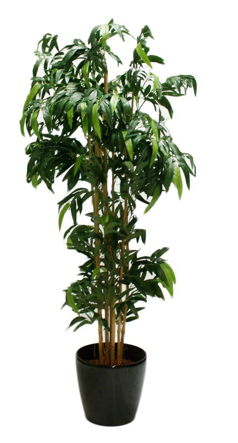 pflanzen bambus gross