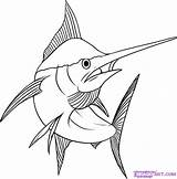Drawing Marlin Tuna Fish Draw Step Drawings Yellowfin Coloring Pages Colouring Line Dragoart Printable Sword Animal Google Sea Print Creatures sketch template