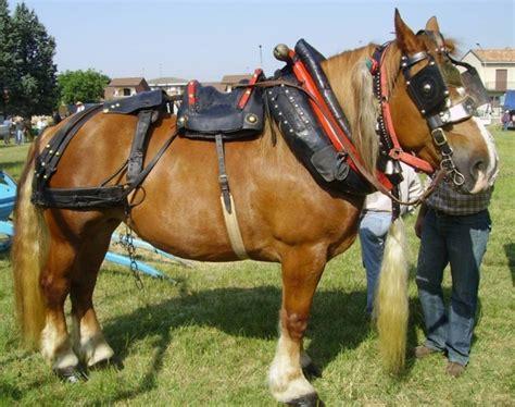 si e du cr it agricole il cavallo in agricoltura