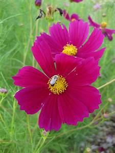 Waltham Fields Community Farm  Pollinators And Flowers