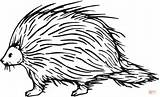 Porcupine Coloring Clipart Clip Printable Cliparts Sheets Animal Library Drawing Porcupines Template Supercoloring Categories Kid Sketch Paper sketch template
