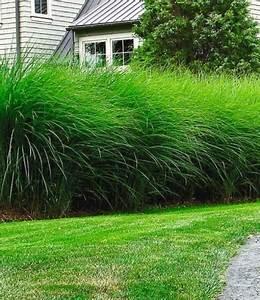 Sichtschutz Mit Pflanzen : sichtschutz mit pflanzen die besten 17 ideen zu ~ Michelbontemps.com Haus und Dekorationen
