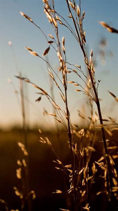 Iphone Nature Plus Weed Wallpapers Retina Sunlight