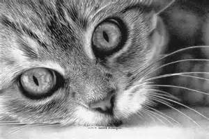 cat sketches 30 beautiful cat drawings best color pencil drawings and