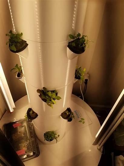 Tower Lights Grow Garden Reddit Hard