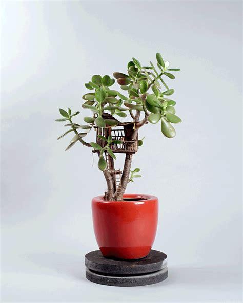 jedediah corwyn voltz builds tiny treehouses  succulent
