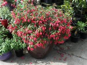small flowering plants for pots best plants for balcony garden
