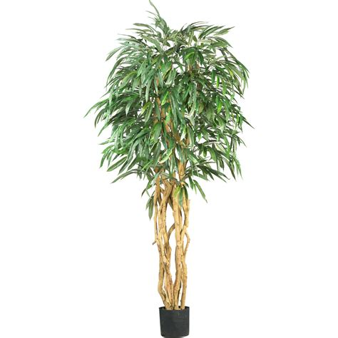 ficus tree 6 foot weeping ficus tree potted 5213