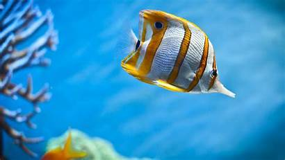 Fish Water Background Ocean Backgrounds Wallpapers Fishes