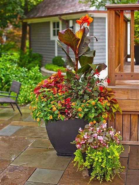 coleus container design 700 best images about container gardening ideas on pinterest container gardening planters