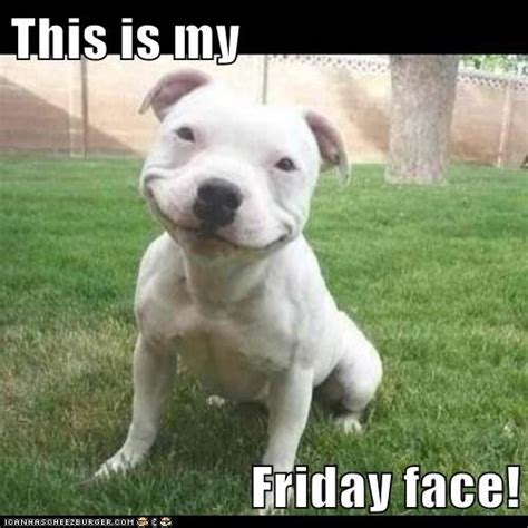 Friday Dog Meme - happy friday dog memes image memes at relatably com