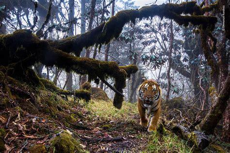 wildlife photographer   year