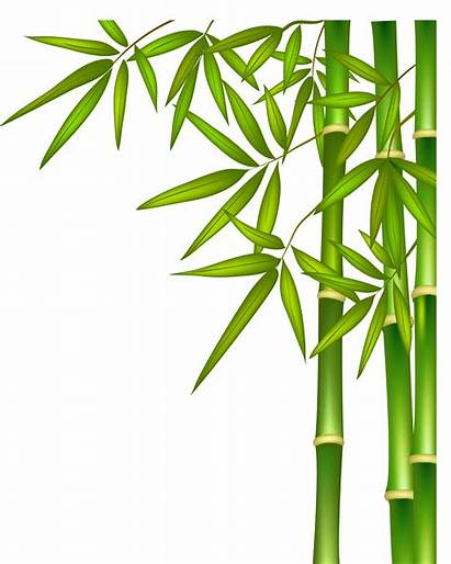Bamboo Clipart Transparent Border Banboo Clip Tree