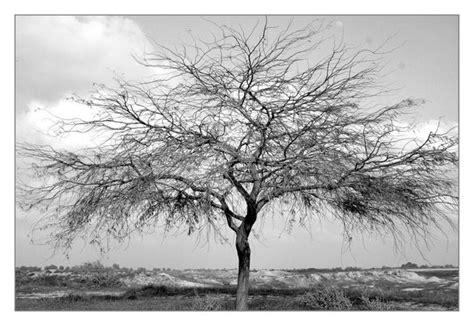Sad Tree Vii By Blackwhiteclub On Deviantart