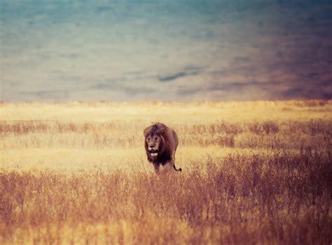 stock photo  africa african animal