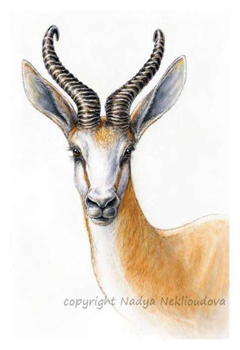 african antelope springbok portrait art print