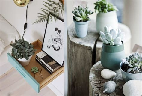 plante de chambre les succulentes des plantes très déco joli place