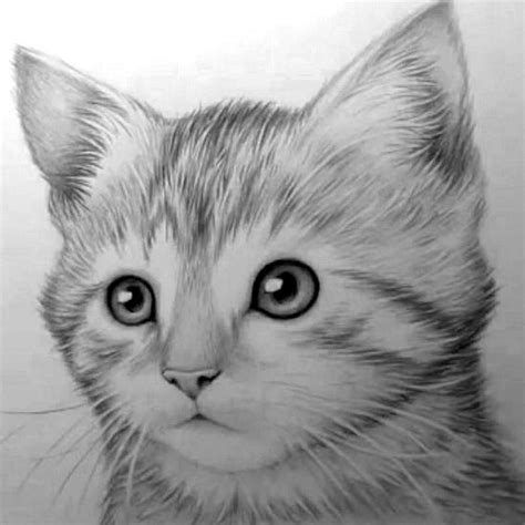 Kitten By Mark Crilley Drawing Manga And Artwork Pinterest