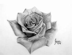 Realistic Rose Drawing Pictures to Pin on Pinterest ...