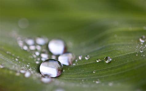 Drops of water macro free image