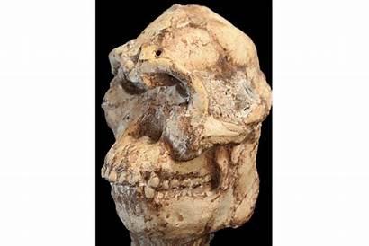 Foot Lucy Australopithecus Csmonitor