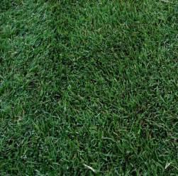 best type of grass 5 best grass types for arizona lawns