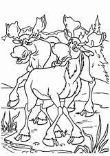 Moose Coloring Elk Pages Books Last sketch template