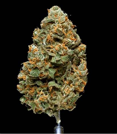Gifs Spinning Kush Cannabis Hindu Hawgs Breath