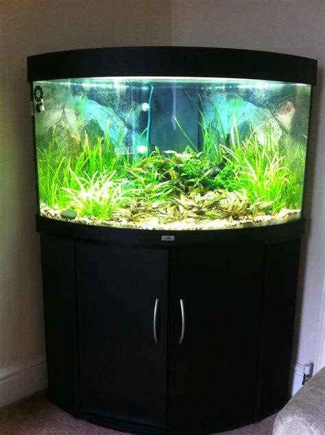 my juwel trigon 190 uk aquatic plant society