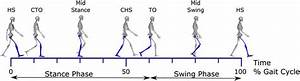 The Gait Cycle  Depicted Is One Gait Cycle  With The Right