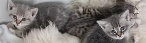 Verein Gründen Kosten : kitten in not e v ~ Eleganceandgraceweddings.com Haus und Dekorationen