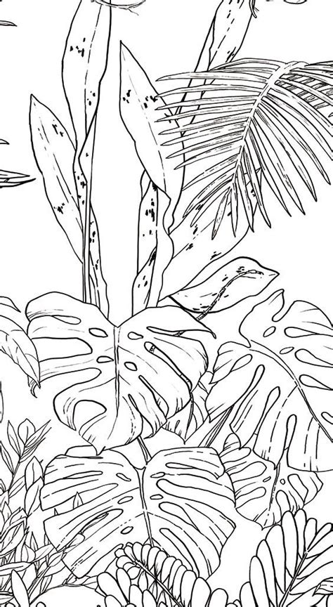 pl l tropical duo les 38 meilleures images du tableau papier peint
