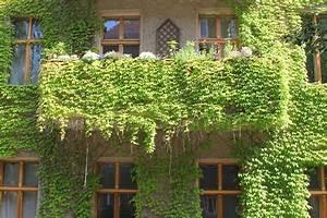 naturnaher balkon nabu hamburg With französischer balkon mit bambus pflanzen garten