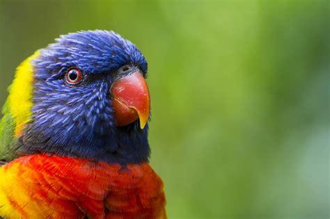 macro, Birds, Animals, Parrot Wallpapers HD / Desktop and ...