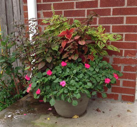 Shade Container  Gardening Pinterest