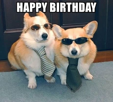 Corgi Birthday Meme - corgi birthday funny happy birthday meme