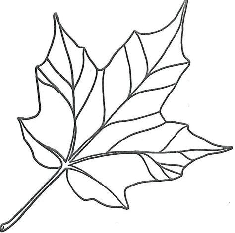 maple fall autumn printable leaf template  leaf coloring page leaf template fall leaves