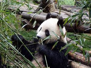 Cool Panda images – My Blog
