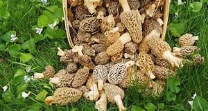 Comment Cultiver Des Champignons : the real way to grow morel mushrooms on your own garden pinterest ~ Melissatoandfro.com Idées de Décoration