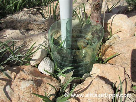 pflanzen bewässern pet flaschen pflanzen bew 228 ssern mit plastikflasche flaschen statt blumen gie en frag mutti balkonkasten bew