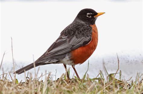 the bruce mactavish newfoundland birding blog the