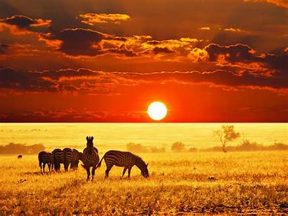 Africa Safari Tour African Handbid Auction 7day