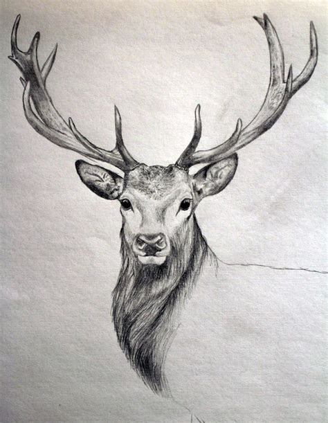 gallery images  sketches  animals drawing art gallery