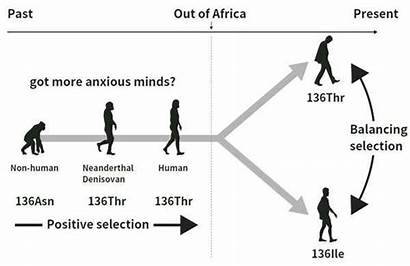 Human Evolution Traits Evolutionary Psychiatric Disorders Personality