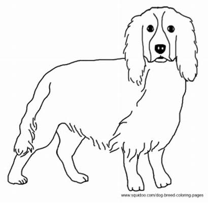Spaniel Coloring Pages Dog Springer Breed Drawings
